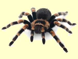 top_spider_facts